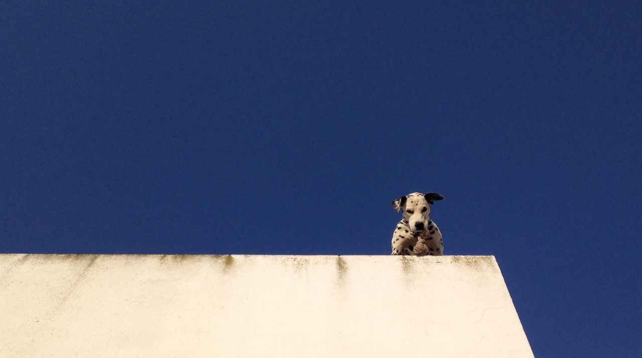 Low angle view of dog on building against clear sky