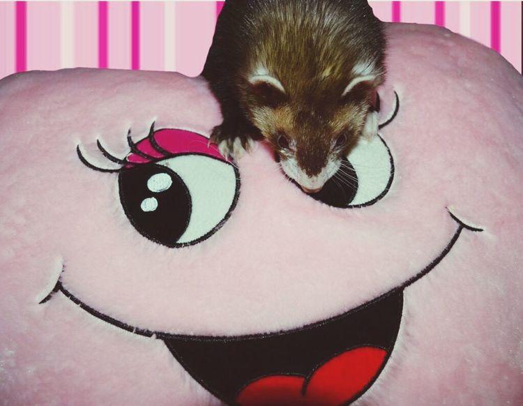 Ferret Cute Cute Pets Pink Lovley  Animals Stuffed Animals my little cutie ❤️💕 First Eyeem Photo