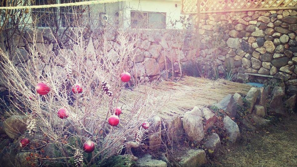 도란도라누하우스 월동준비 & 크리스마스 준비!! Jo's 장소