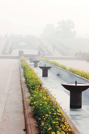 Flowers Rajghat India Dehli Newdehli Smoke Fog