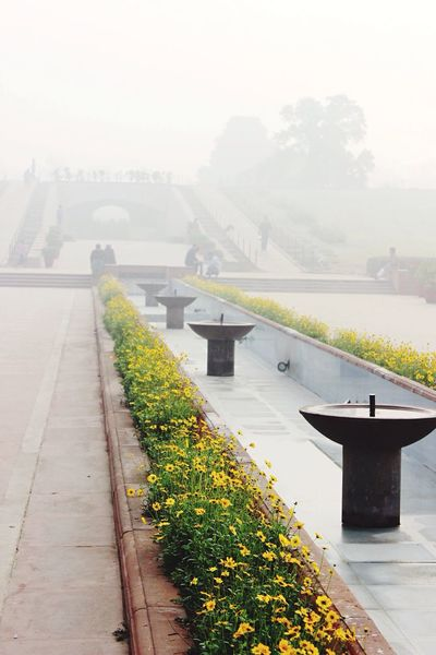 Flowers Rajghat India Dehli Newdehli Smoke Fog