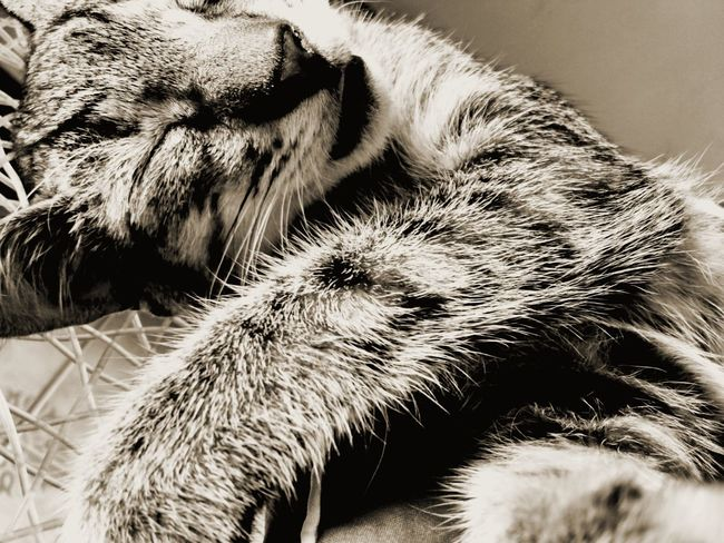 Check This Out this is George The Cat Old Photo Sleeping Cat Hi! Mobile Photography Photography Relaxing