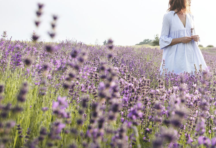 Godiscoversummer Lavender Lavender Field Country Countryside Field Hills Lilac Color Violet Color Woman Noface depth of field Flowers Nature Best EyeEm Shot Beauty In Nature Flowers, Nature And Beauty Beauty Flower Young Women Rural Scene Women Field Agriculture Purple Summer Lavender Standing Summer Exploratorium