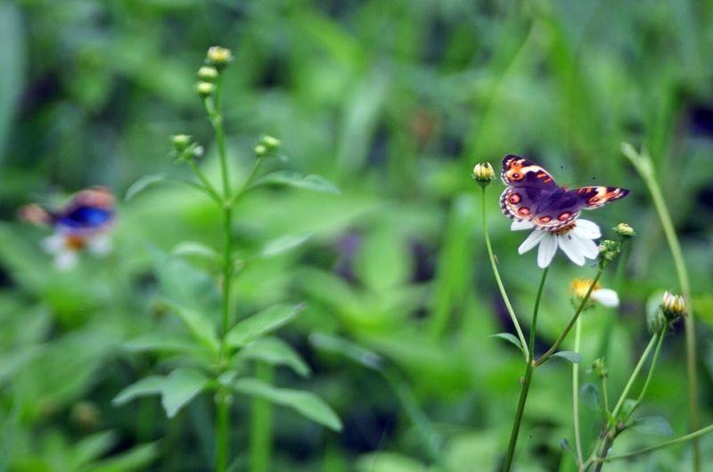 Butterfly In Jakarta City
