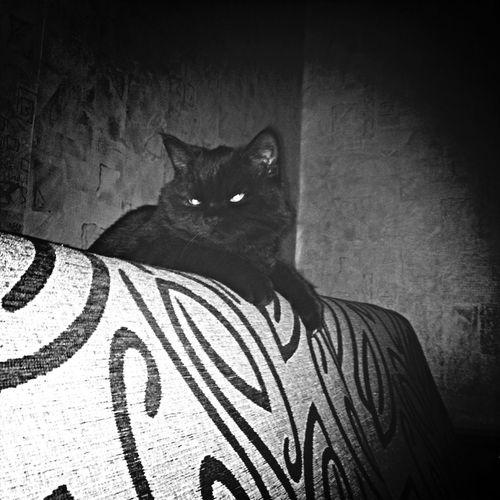 сатана?? cat♡ dartvader Blackandwhite