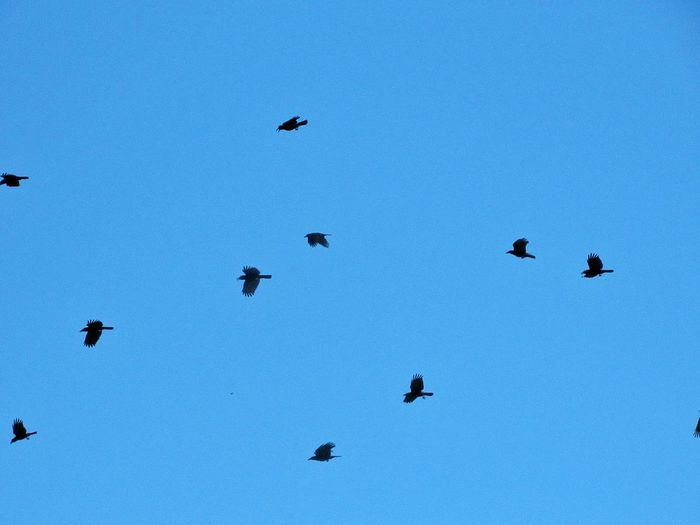 when the crows
