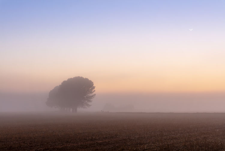 Beauty In Nature Field Fog Hazy  Idyllic Morning No People Scenics - Nature Sky Tranquil Scene Tree