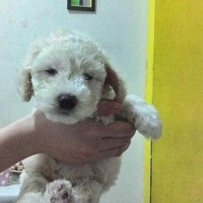 Your soooooo moymoy jr.! 🐶 DogLove Puppy