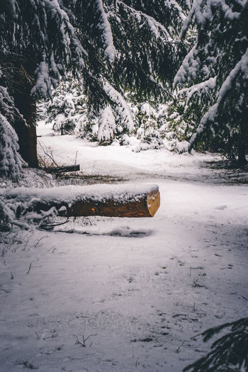WInter deep in the forest Snow Cold Temperature Winter Tree Nature Beauty In Nature Day No People Covering Land Plant Scenics - Nature Non-urban Scene Tranquility Frozen Water Outdoors Tranquil Scene Cold Snowcapped Mountain Forest Hiking