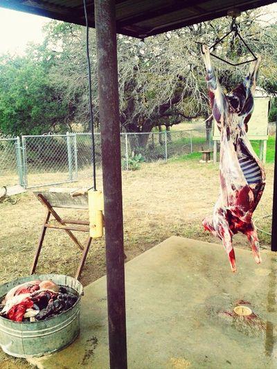 Texas Fresh Meat Deer Hunting