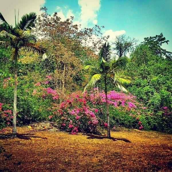 Clourful Park Trees Cration chinatravelgram