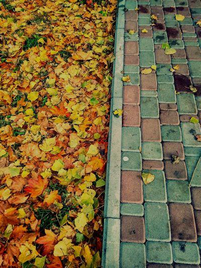 Осень 🍁🍂 асфальт октябрь ❤️ каникулы урааааааааааааааааааааааааааааааааааааааааа😀😀😀🎉🎉🎉🎉🎉