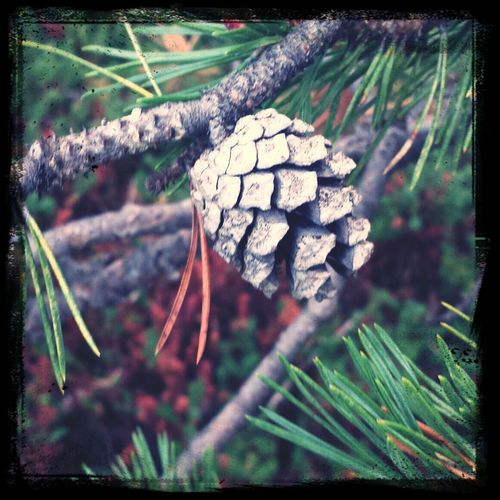 Naturelovers Hello World EyeEm Lathari