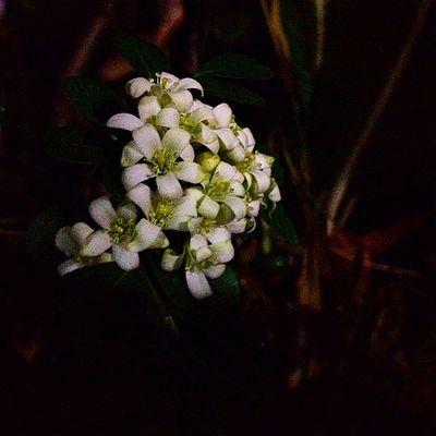 Sweetdream Flower White Thai Thailand Thaionly Beautiful Bangkok Nightlight Nightlife