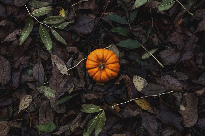 High Angle View Of Pumpkin On Autumn Leaves
