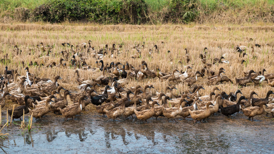 Flock of birds in a lake
