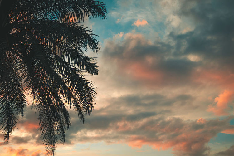 https://youtu.be/2nrgTossoB0 Beauty In Nature Branch Cloud - Sky First Eyeem Photo Growth Leaf Low Angle View Nature No People Orange Color Outdoors Palm Leaf Palm Tree Plant Scenics - Nature Silhouette Sky Sunset Tranquil Scene Tranquility Tree Tropical Climate