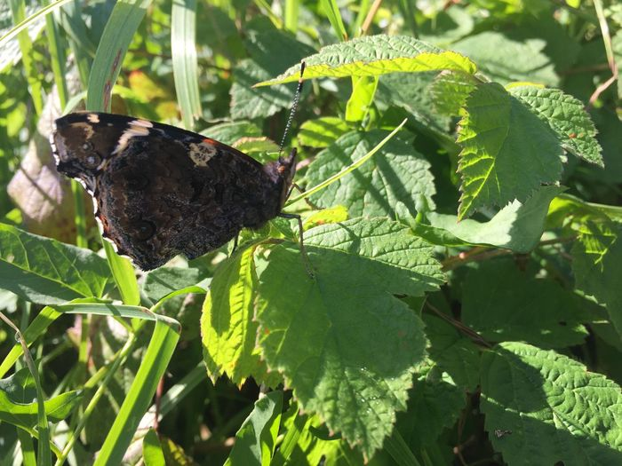 Animal Themes Plant Part Animal Wildlife Leaf Green Color Animals In The Wild Animal One Animal Plant Growth Nature Sunlight Day Close-up Butterfly - Insect Animal Wing Beauty In Nature