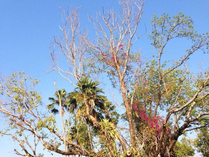 peace & love. Trees Nature
