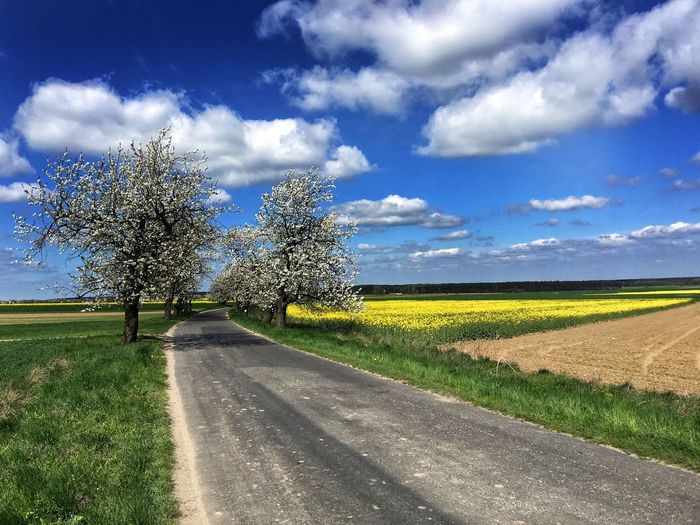 Góra Świętej Anny Annaberg Opole Opolskie Polska Poland Winding Road Way Spring Road Sky Plant Cloud - Sky Road Nature Beauty In Nature Growth Land Tranquility Sunlight Landscape Field
