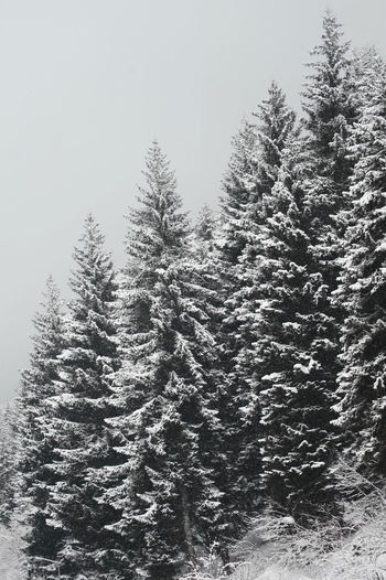 Beauty In Nature Cold Temperature Day Forest Growth Landscape Mountain Nature No People Outdoors Pine Tree Scenics Sky Snow Spruce Tree Tranquil Scene Tranquility Tree Weather Winter