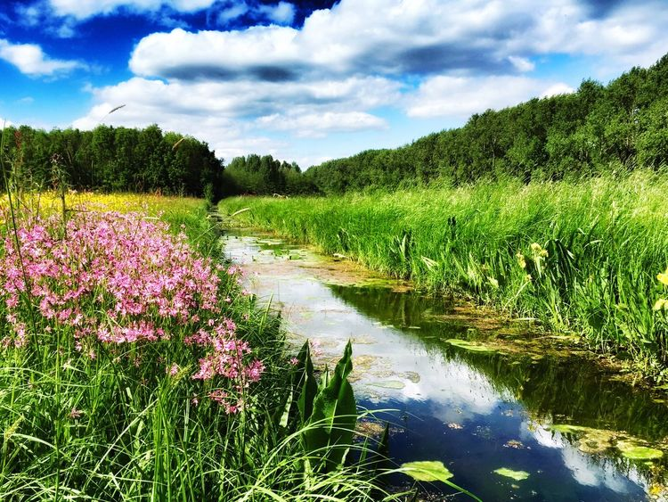 Nature Landscape Flowers Water Reflections