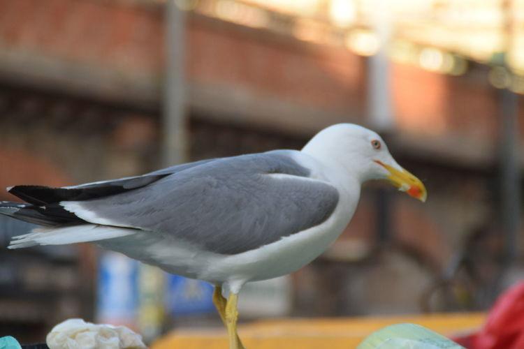 Bird Animal Wildlife Animal Themes Day Nature Street Photography