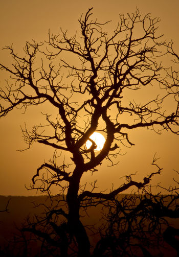 Silhouette of tree in Wichita region of Oklahoma Bare Tree Beauty In Nature Branch Dusk Nature No People Orange Color Outdoors Plant Scenics - Nature Silhouette Sky Sun Sunlight Sunset Tranquil Scene Tranquility Tree