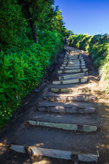 Low angle view of steps amidst trees against sky