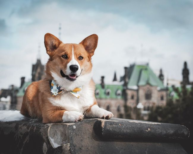Portrait of dog sitting in city