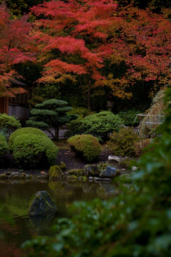 Oregon Autumn