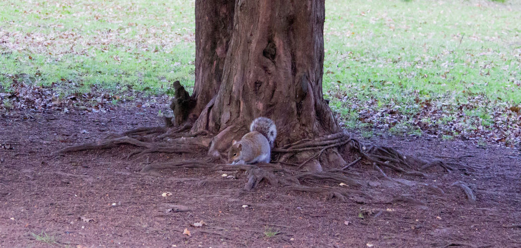 Tree Animal Themes Tree Trunk Animals In The Wild One Animal No People Outdoors Squirrel