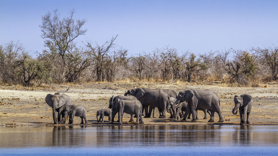 Elephants at riverbank against sky