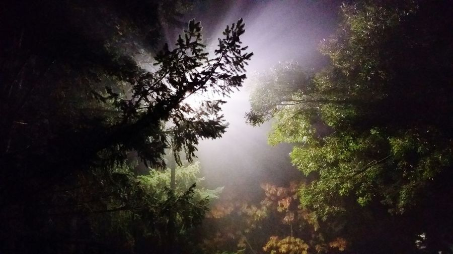 Ligh in the fog