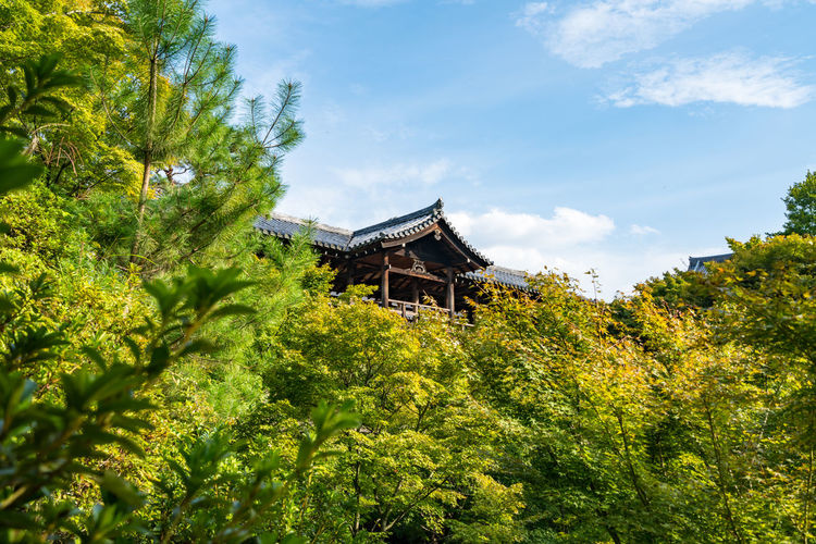 Some top part of japanese ancient shines with forest foreground in beautiful sky scene. Architecture Day Green Color Japan Japanese  Low Angle View Nature No People Outdoors Shinto Shinto Shrine Shinto Temple Sky Tradition Traditional Travel Destinations Tree
