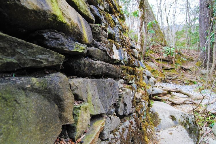 Rocks in the Smokey Mountains Plant Tree Solid Nature Rock Growth No People Sunlight Beauty In Nature Outdoors Tranquility Built Structure Moss Close-up Textured  Day Green Color Forest Rock - Object Land