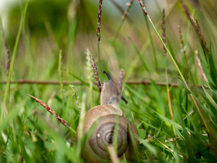 Close-up of snail on grass