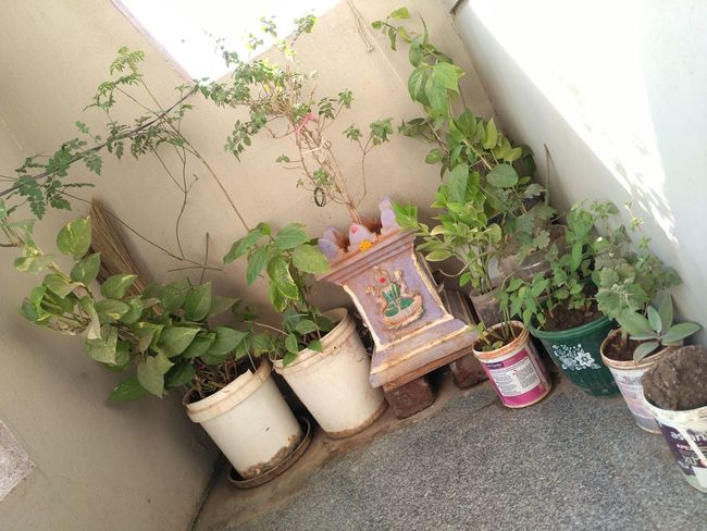 :-) Arrangement Green Green Color Growth Paint Buckets Plant Potted Plant Recycle