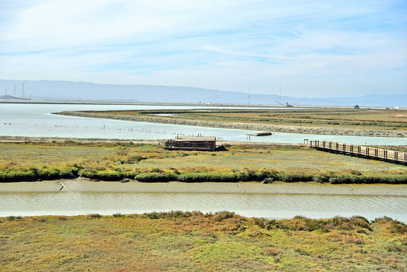 Newark Slough 6 Fremont,Ca. Tidal Wetlands Marsh Restored Marshlands Wildlife Refuge Nature Beauty In Nature Nature_collection Duck Hunters Cabin Bridge Boardwalk Overpass Creek Salt Ponds Mudflats San Mateo Bridge Landscape_photography Landscape_Collection Marin Headlands Pacific Flyway Bird Habitant Communication Towers Landscape Boardwalk