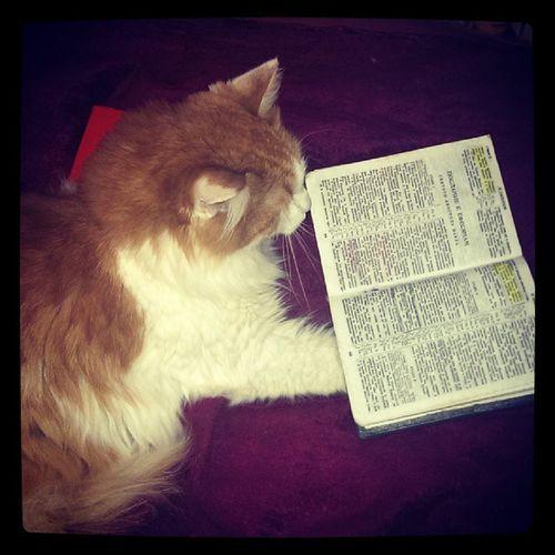 Кот читает Библию, а ты?
