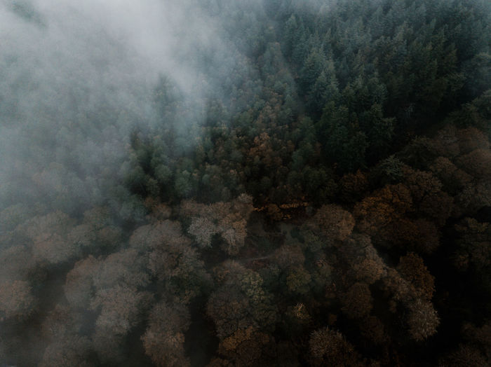Autumn Forest drone view Tree Beauty In Nature No People Plant Nature Day Tranquility Scenics - Nature Tranquil Scene Fog Forest Environment Non-urban Scene Smoke - Physical Structure Outdoors Land Aerial View Sky High Angle View Pollution