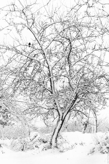 Neige Bare Tree Bird On A Tree Black & White Black And White Blackandwhite Branch Cold Cold Temperature Covered Covering Frozen Nature Noir Et Blanc Outdoors Season  Showcase: December Snow Snowy Snowy Trees Tranquility Tree Tree Trunk Weather Winter It's Cold Outside