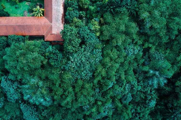 Green Color Plant No People Growth Day Nature Tree Beauty In Nature Outdoors High Angle View Close-up Leaf Architecture Freshness Tranquility Forest Drone  Aerial View Nature The Great Outdoors - 2019 EyeEm Awards Tree Trees