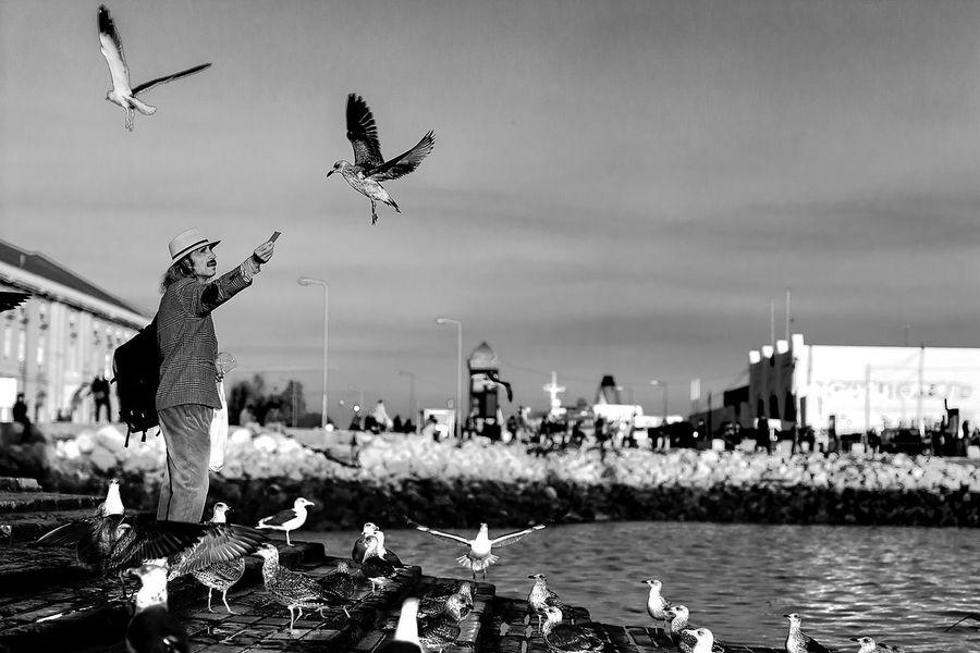 Seagulls Alimentar Animal Themes Bird Cais Das Colunas Cloud - Sky Comida Day First Eyeem Photo Flying Horizon Over Water Large Group Of Animals Lisboa Lisbon Men Nature Outdoors Sky Tejo Water