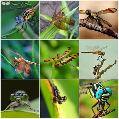 ---- repost ---- So many thank you @ig_dragonflies for featuring my photo ( MR )➡ in to your amazing gallery, im really apreciate it, keep tagging Ig_dragonflies for your chance to be featured.