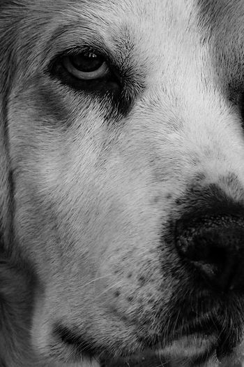 One Animal Mammal Domestic Animals Domestic Pets Dog Canine Animal Body Part Close-up Eye No People Vertebrate Body Part Animal Eye Portrait Day Animal Nose Snout Animal Mouth