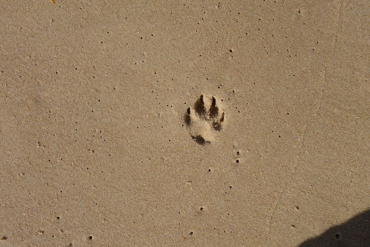 High Angle View Of Paw Print At Sandy Beach