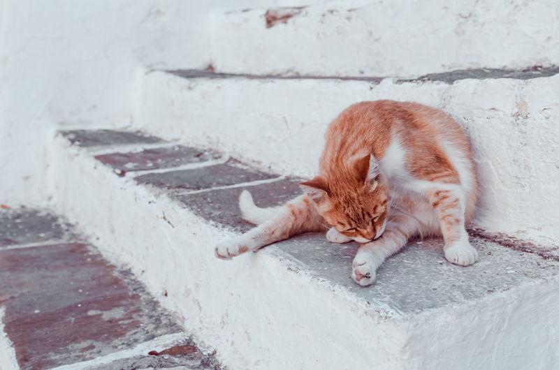 Full length of ginger cat lying on wall