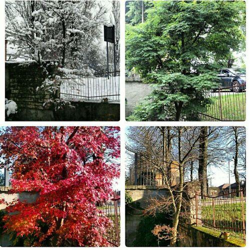 Le 4 stagioni del mio acero