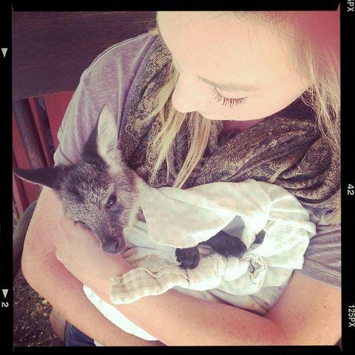 I wish I never had to let him go! kangaroo love <3